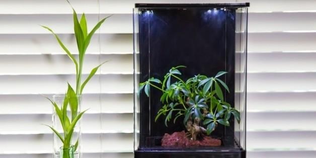 Das Treibhaus im Miniaturformat reinigt und befeuchtet die Luft