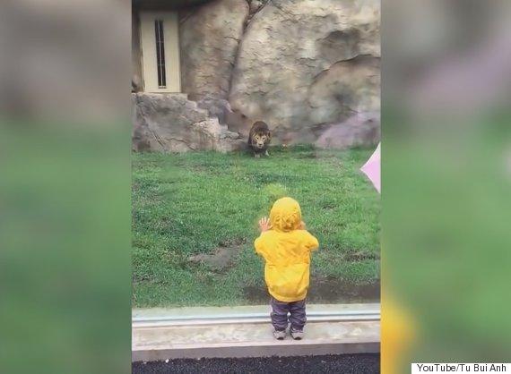 lion toddler zoo japan