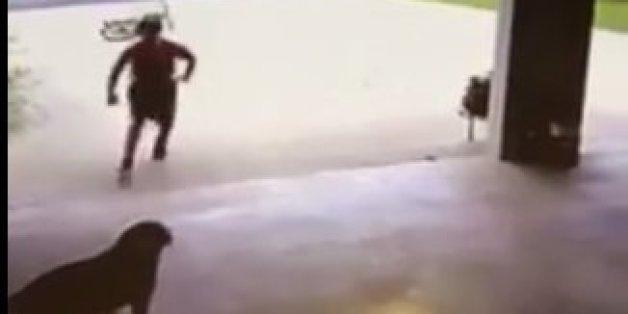 Überwachungskamera offenbart, was der Nachbar täglich mit dem Hund anstellt