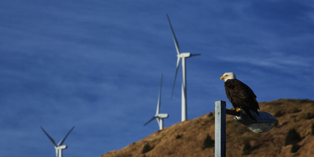 Bald eagle perched on lamp post in downtown Kodiak with wind turbines in background, Southwest Alaska
