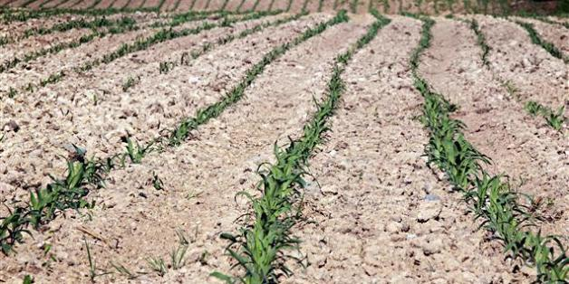 La Mamda accélère le paiement des indemnités aux agriculteurs touchés par la sécheresse
