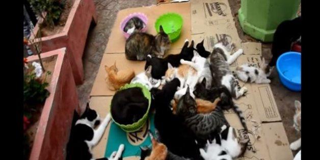Soit il disperse ses 56 chats, soit ils seront tous tués au bout de 48 heures.