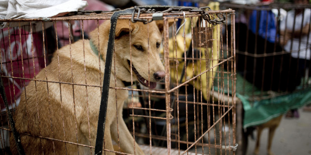 Dogs are seen in cages for sale at a market ahead of a dog meat festival in Yulin in south China's Guangxi Zhuang Autonomous Region, Monday, June 20, 2016. Restaurateurs in a southern Chinese town will holding an annual dog meat festival which falls on June 21, the day of summer solstice, despite international criticism. (AP Photo/Andy Wong)