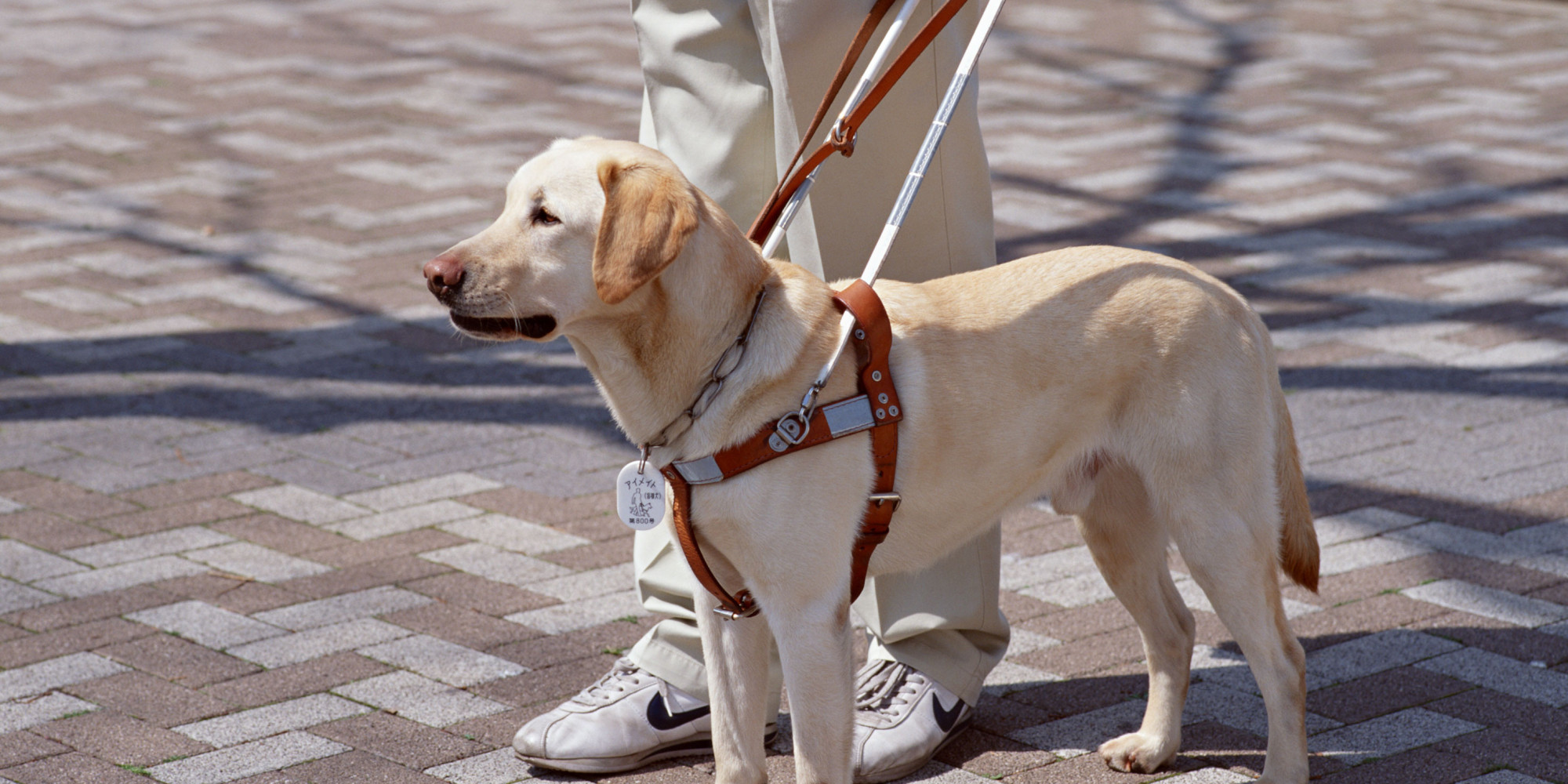 How To Get A Seeing Eye Dog For The Blind