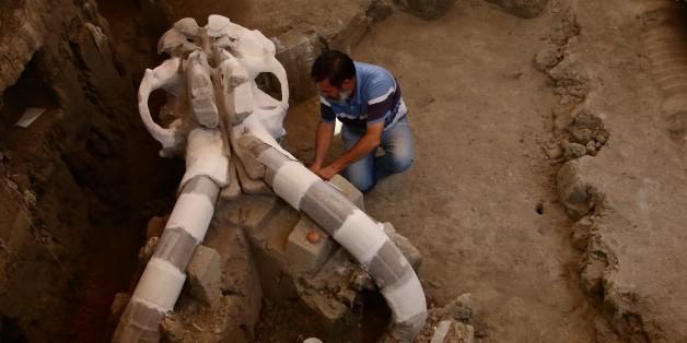 Un mammouth vieux de 14.000 ans sort de terre au Mexique  08:46 - 25/06/16  © AFP L'archéologue mexicain, Luis Cordoba, travaille sur le crâne gigantesque d'un mammouth vieux de 14.000 ans, le 24 juin 2016 à Tultepec