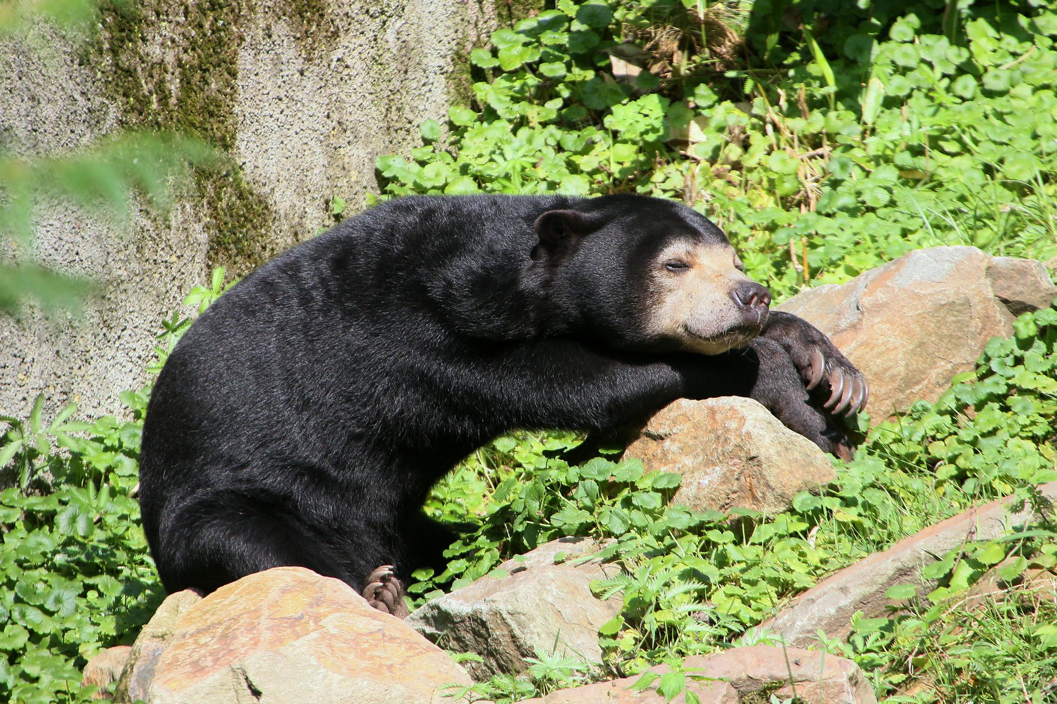 bear honey