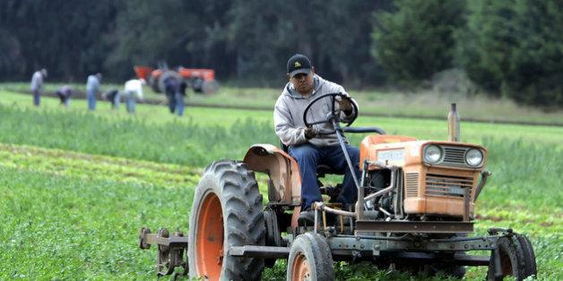 Arbeiter auf einem Biobauernhof in Bolinas, Kalifornien