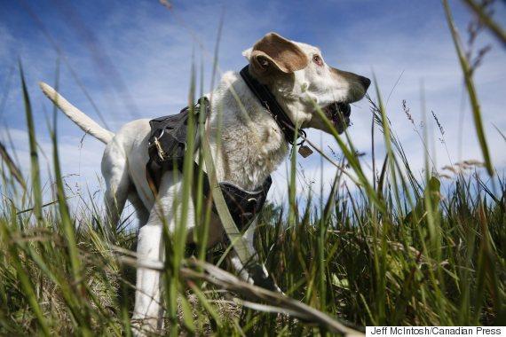 oil spill dog duke