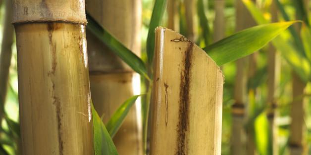 bambus als nachhaltiger rohstoff auf feldern huffpost deutschland. Black Bedroom Furniture Sets. Home Design Ideas