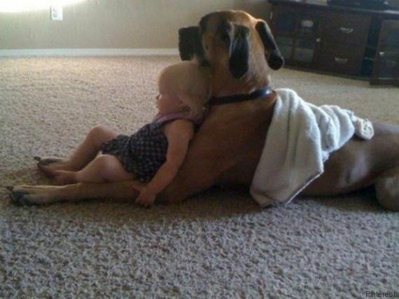 kinder hunde