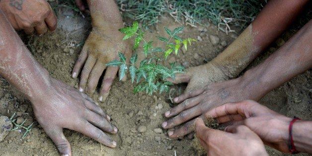 In Indien wurden an einem Tag 50 Millionen Bäume durch 800.000 Bürger gepflanzt.