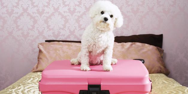 Dog Sitting on Suitcase