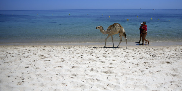 FILE - In this June 28, 2015 file photo, tourists and a baby camel walk on a beach in front of the Imperial Marhaba Hotel in Sousse, Tunisia. The blood on the sand has washed away, but the damage wreaked on Tunisia by a few terrifying minutes of gunfire at a beach resort will be deep and lasting. The tourist economy is likely to be gutted: Up to 2 million hotel nights per year are expected to be lost, hastened by warnings from Britain and other European governments last week that their citizens are no longer safe on . (AP Photo/Darko Vojinovic, File)