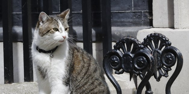 FILE - This is a  Wednesday, July 13, 2016  file photo of Larry the Downing Street as he cat sits on the steps of 10 Downing Street in London, after Britain's Prime Minister David Cameron left to face prime minister's questions for the last time . The renowned Battersea Dogs and Cats home Monday Aug. 1, 2016  offered Britain's government a bit of know-how on discouraging cat fights on the doorstep at the seat of power. Battersea says it's offering advice after the resident mouser, Larry, was reportedly captured in a scrap with Palmerston, the Foreign Office cat. (AP Photo/Frank Augstein, File)