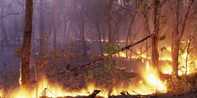 Le Maroc a déployé une stratégie de lutte contre les incendies qui porte ses fruits