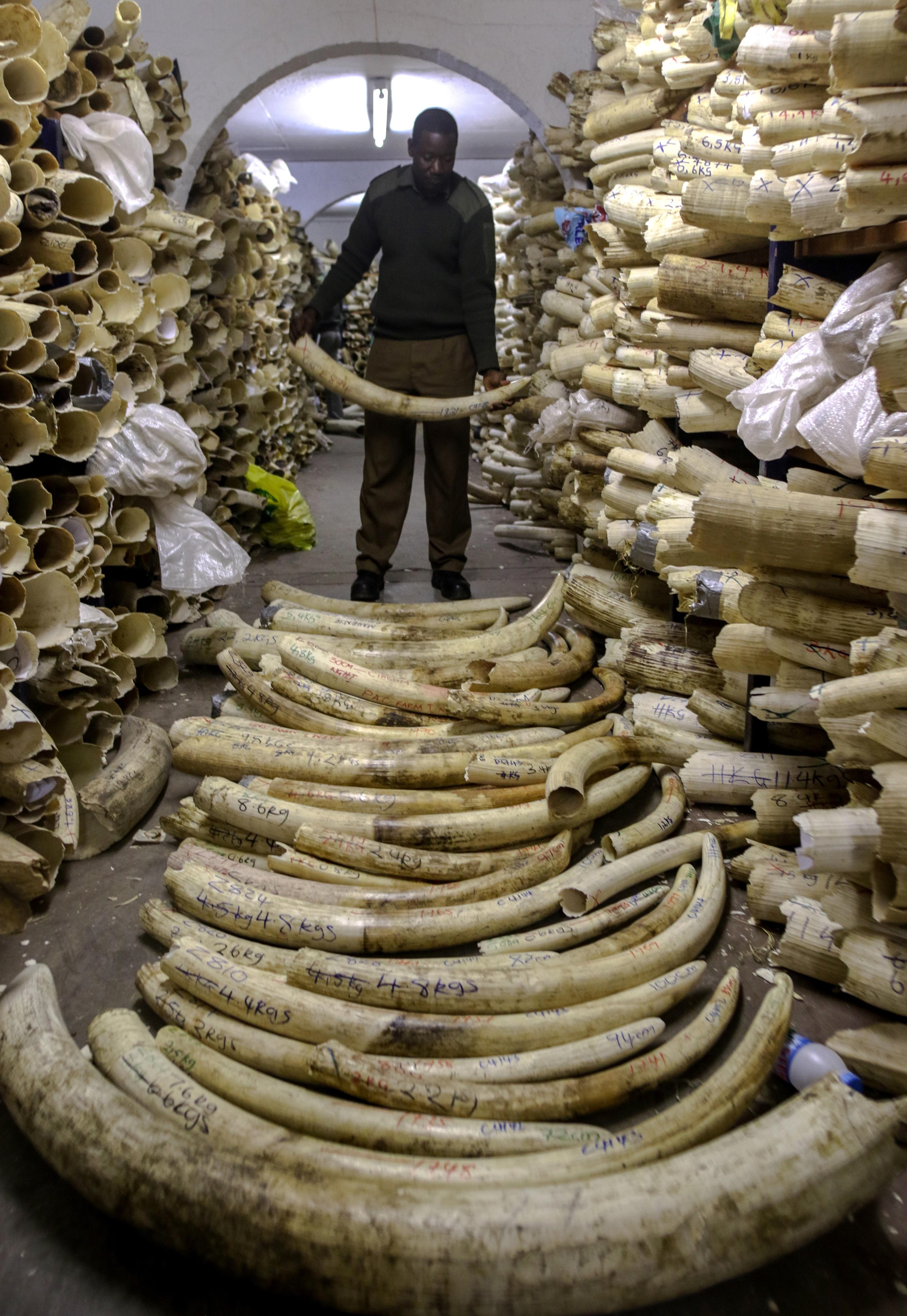 reserve ivoire