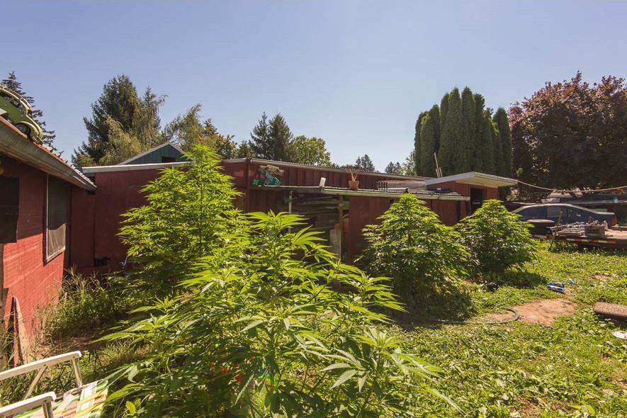 marijuana house portland