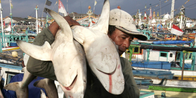 "A worker unloads sharks from wooden boats in a fish port in Banyuwangi in Indonesia's East Java province in this June 27, 2008 file photo. Three shark attacks in Australia in two days this week sparked a global media frenzy of ""Jaws"" proportions, but sharks are more at risk in the ocean than humans with man killing million of sharks each year. Picture taken June 27, 2008. To match feature AUSTRALIA-SHARKS    REUTERS/Sigit Pamungkas/Files  (INDONESIA)"
