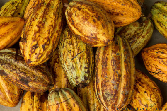 fruto chocolate