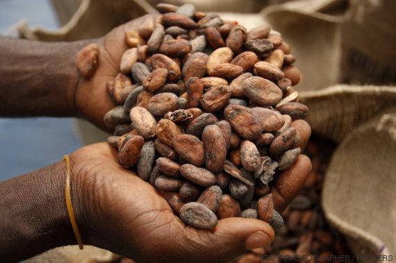 semillas cacao