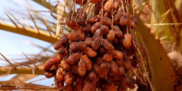 Dates, Mafo, Lybia. (Photo by: Godong/UIG via Getty Images)