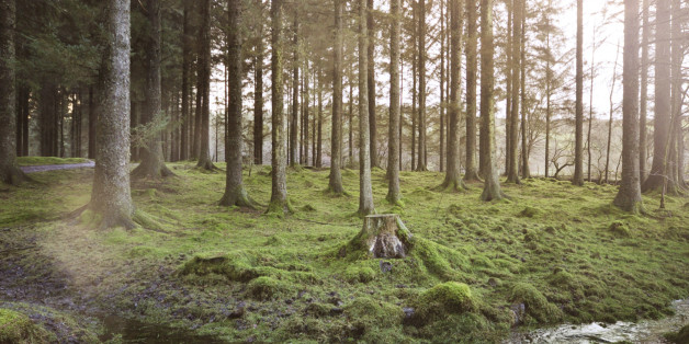 Archivbild: Ein Wald in Europa