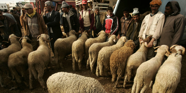 Men sell sheep in a market in Rabat December 19, 2007. Muslims around the world celebrate Eid-al-Adha, or Feast of the Sacrifice, to mark the end of the haj by slaughtering sheep, goats, cows and camels to commemorate Prophet Abraham's willingness to sacrifice his son Ismail on God's command. REUTERS/Rafael Marchante (MOROCCO)