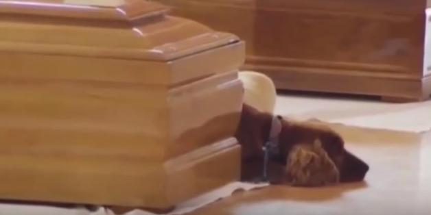 Sein Herrchen kam beim Erdbeben in Italien ums Leben