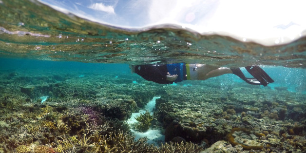 Eine Touristin schnorchelt über dem Great Barrier Reef in Australien