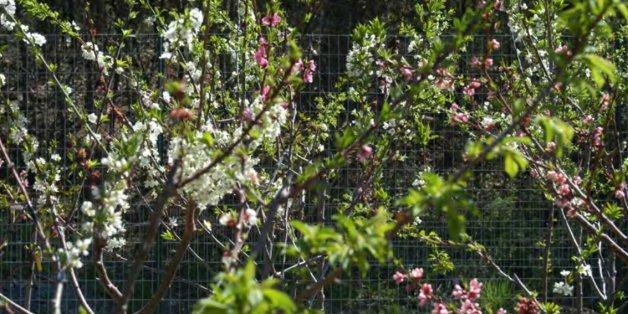 """""""The 40 fruits tree"""": Bäume dieser Art können 40 verschiedene Früchte tragen"""
