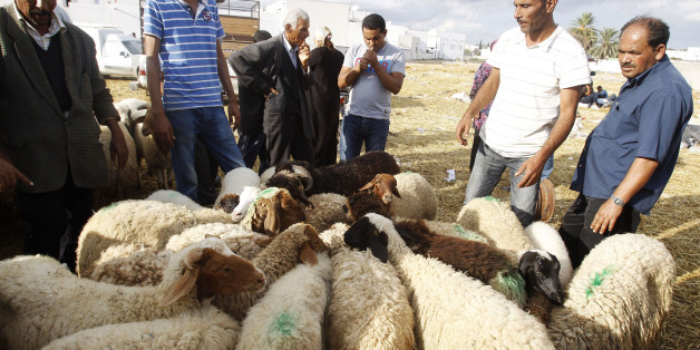 Tunisians buy sheep ahead of the Eid al-Adha festival in Tunis October 25, 2012. Muslims around the world celebrate Eid-al-Adha, marking the end of the haj, by slaughtering sheep, goats, cows and camels to commemorate Prophet Abraham's willingness to sacrifice his son Ismail on God's command.  REUTERS/Zoubeir Souissi (TUNISIA - Tags: ANIMALS RELIGION)