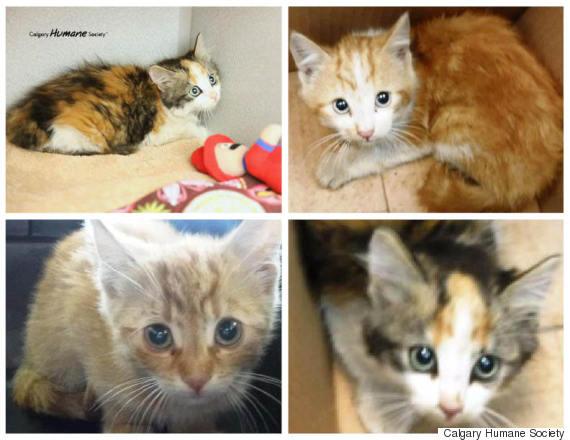 calgary humane society kittens