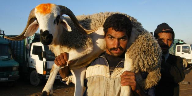 L'Aïd Al Adha, ou le business juteux du mouton 2.0