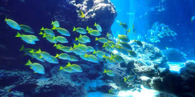 Marine fish in underwater world.