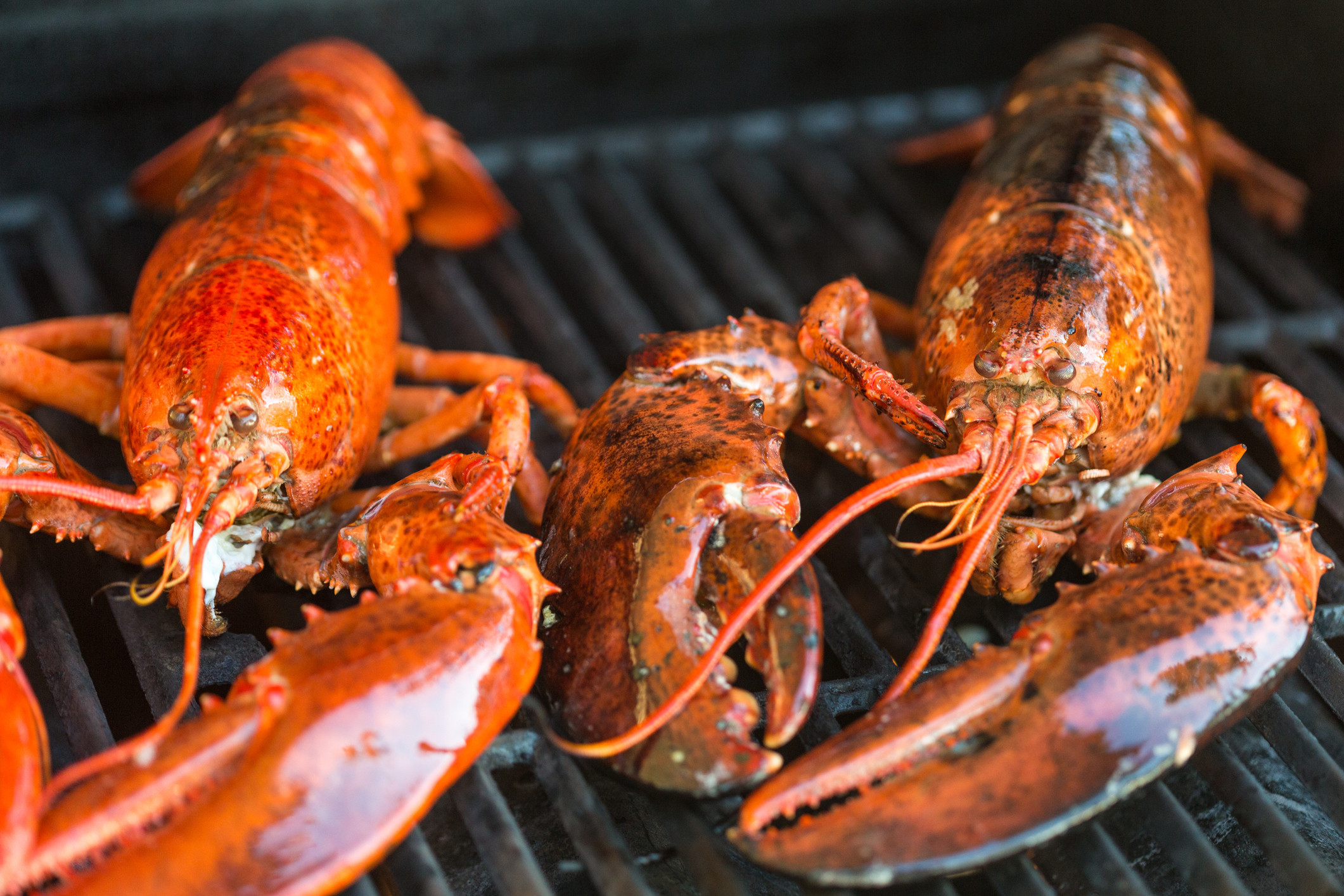 lobster canada
