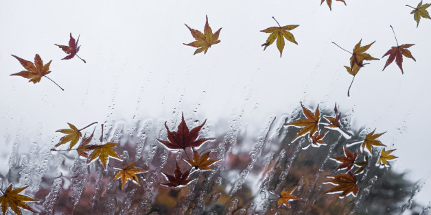 Leaves of the maple on a window in the rain