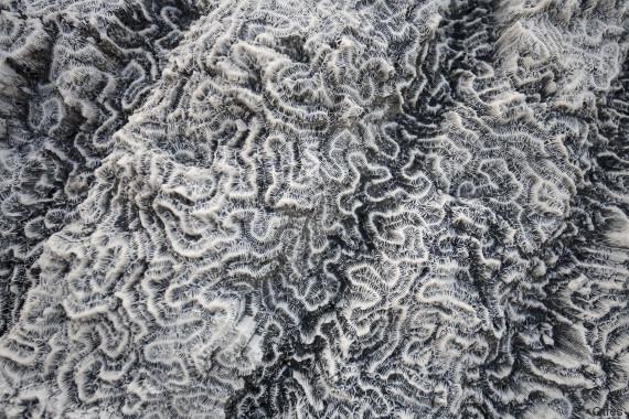 coral fosilizado