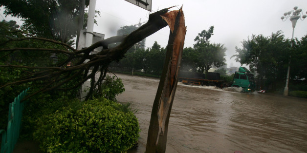 QUANZHOU, CHINA - SEPTEMBER 10: (CHINA OUT) Fallen trees lay on the ground after being hit by Typhoon Meranti on September 10, 2010 in Quanzhou, Fujian Province of China. Meranti, the 10th typhoon to hit China this year, made landfall at Shishi City in the southeastern Chinese province of Fujian at 3:30 a.m. Friday, according to provincial flood control authorities. (Photo by VCG via Getty Images)