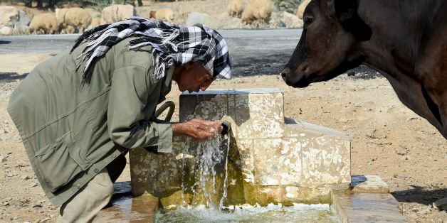 A Tunisian shepherd drinks water from a source as he herds his flock on August 21, 2016 in the village of Sidi Ahmed Jedidi, located in the north of Tunisia in the Beja province.  / AFP / FETHI BELAID        (Photo credit should read FETHI BELAID/AFP/Getty Images)
