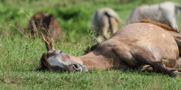 Soldaten der Bundeswehr töteten 27 Pferde zu Versuchszwecken. (Symbolbild)