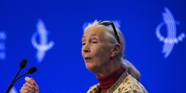 "Dame Jane Goodall attends a panel on ""Commitment to Action: Partnership to Save Africa's Elephants"" at the Clinton Global Initiative (CGI) in New York September 26, 2013. The CGI was created by former U.S. President Bill Clinton in 2005 to gather global leaders to discuss solutions to the world's problems.     REUTERS/Lucas Jackson (UNITED STATES  - Tags: ENVIRONMENT POLITICS)"