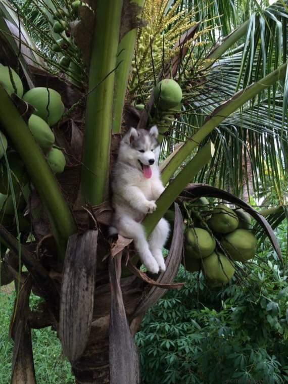 chien detournement