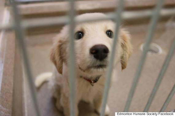 edmonton humane society rescues