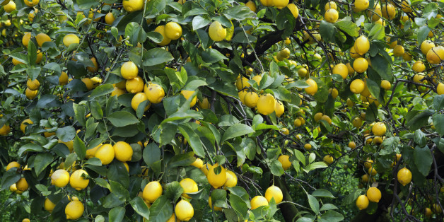 Japan, Chugoku Region, Hiroshima Prefecture, Onomichi, Sedota, Lemon tree. (Photo by: JTB/UIG via Getty Images) (Photo by: JTB Photo/UIG via Getty Images)