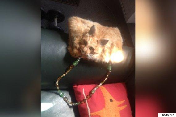 dead cat bag
