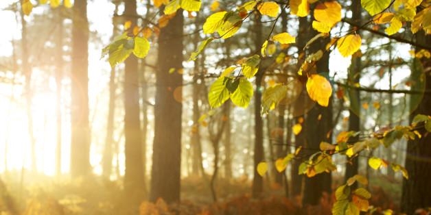 Ecosia: Die grüne Suchmaschine hat 5 Millionen Bäume gepflanzt