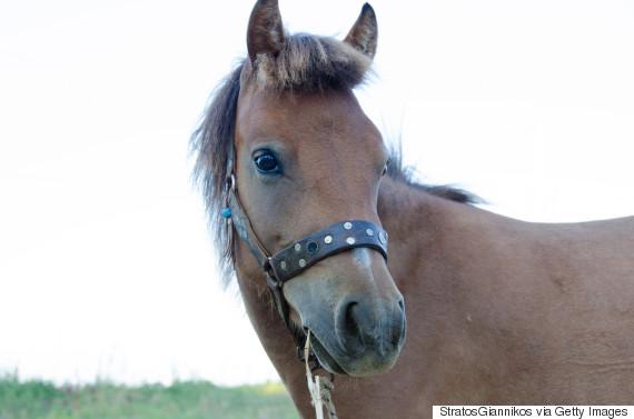 skyrian horse