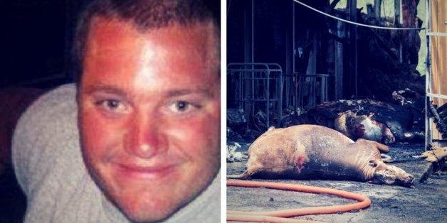 Bizarrer Fall: Bauer liegt tot auf dem Feld, daneben finden Arbeiter 16 tote Kühe