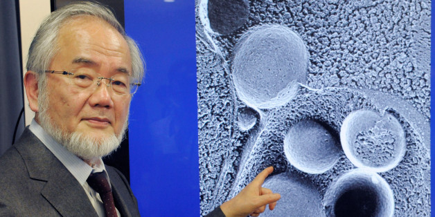 Yoshinori Ohsumi, a professor of Tokyo Institute of Technology is pictured in Tokyo, Japan, March 25, 2015 in this photo released by Kyodo. To go with NOBEL-PRIZE/MEDICINE   Mandatory credit Kyodo/via REUTERS ATTENTION EDITORS - THIS IMAGE WAS PROVIDED BY A THIRD PARTY. EDITORIAL USE ONLY. MANDATORY CREDIT. JAPAN OUT. NO COMMERCIAL OR EDITORIAL SALES IN JAPAN.