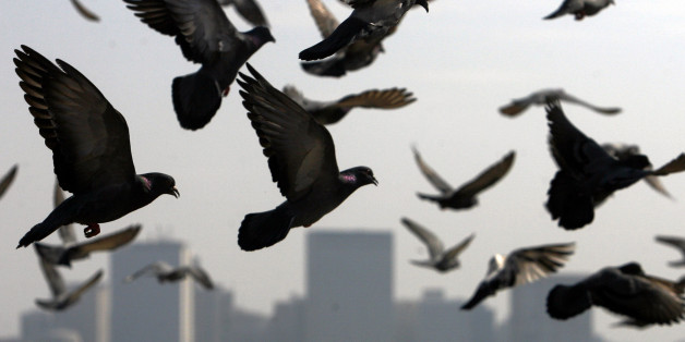 Pigeons fly past the Trident-Oberoi hotel in Mumbai December 7, 2008. REUTERS/Arko Datta (INDIA)